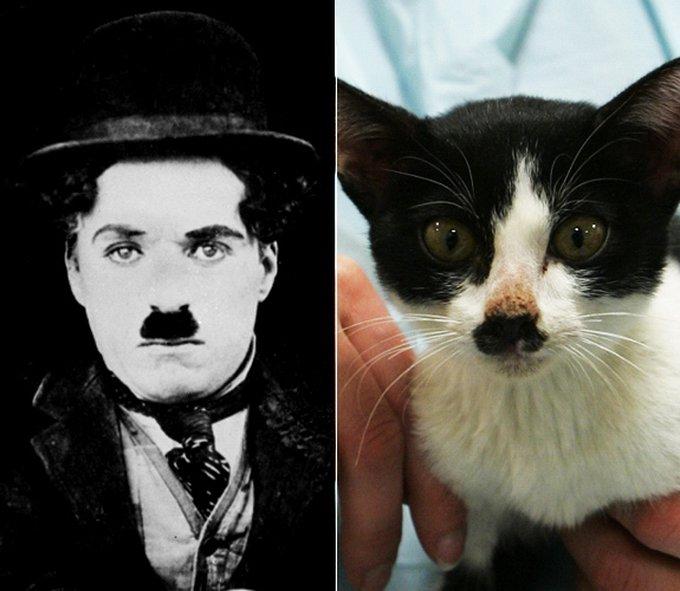 gal-animal-look-alikes-charlie-chapl1n