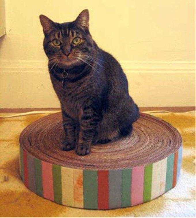 grattoir maison pour chat yummypets