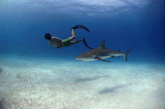 Connaissez-vous les Requin-Bouledogue ?