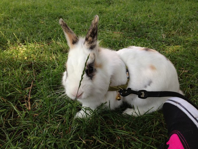 Rencontre avec Tipex, un lapin qui ne se trompe jamais !