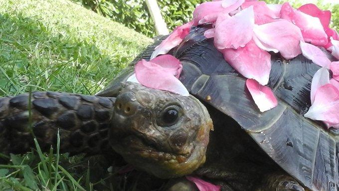 Rencontre avec Samy, une tortue si jolie !