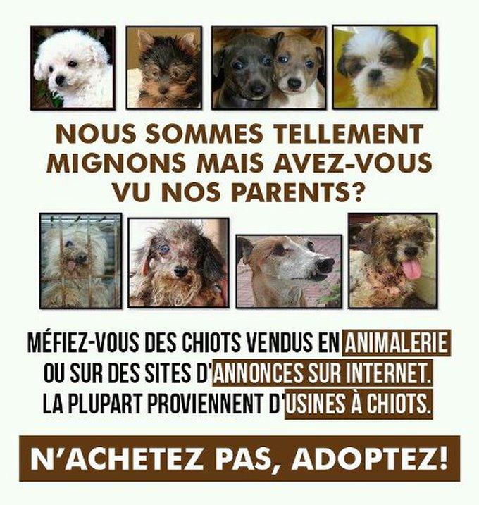 Adopter en animalerie : ce qu'il faut savoir