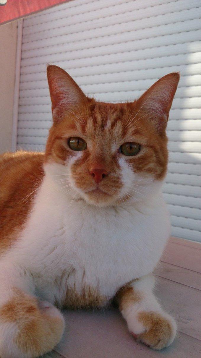 Rencontre avec Boulette, un chat trop chouette !