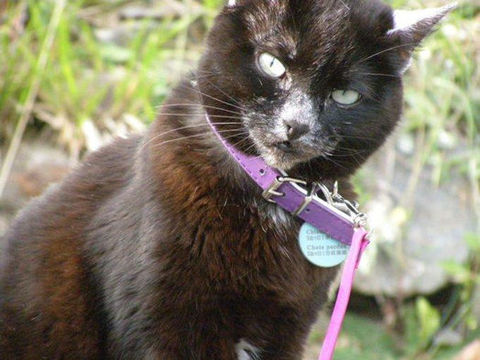 Rencontre avec Canelle, une chatte qui n'est qu'amour !