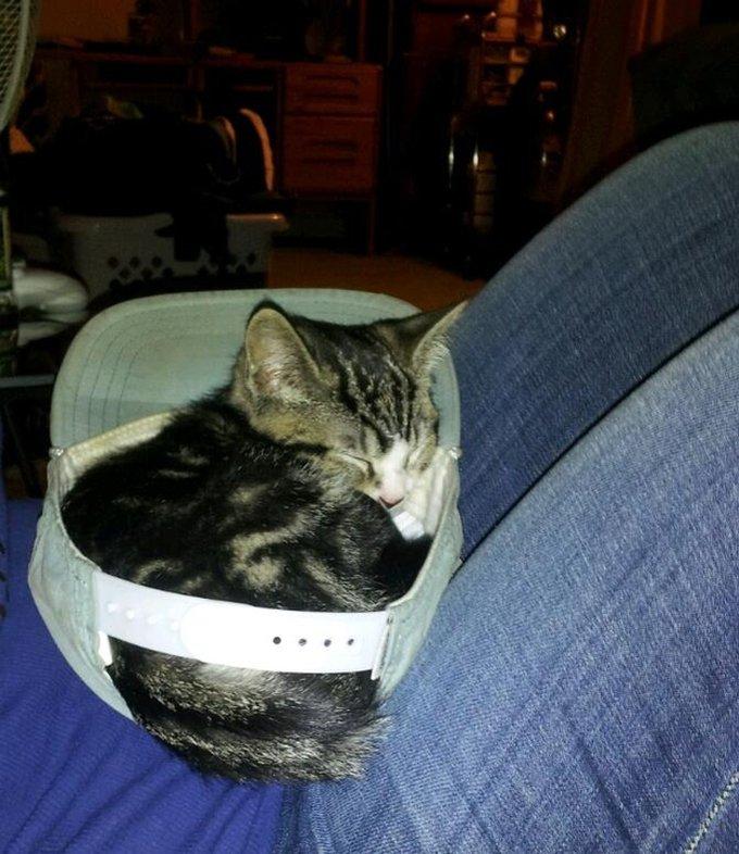 Les meilleurs endroits pour dormir pour les chats !