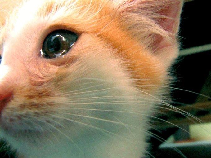 Les animaux pleurent ils ?