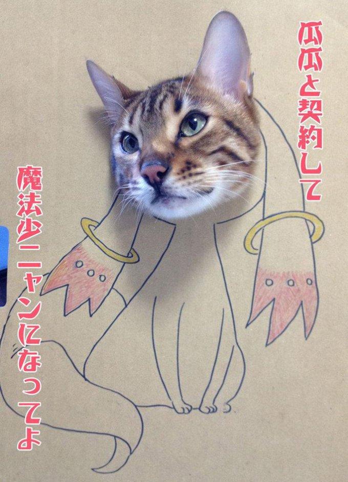 chats-cartons-12