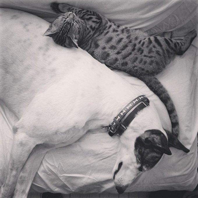 Ami comme chien et chat 10