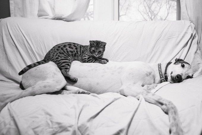 Ami comme chien et chat 4