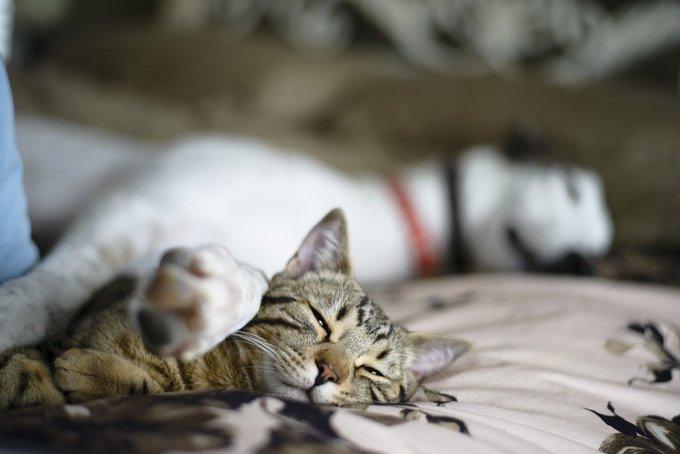 Ami comme chien et chat 6