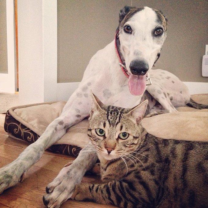 Ami comme chien et chat 7