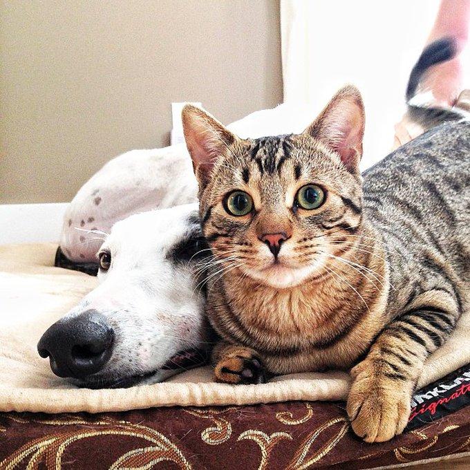 Ami comme chien et chat 8