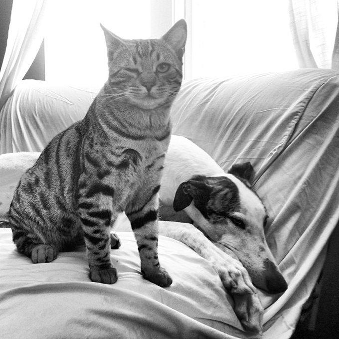 Ami comme chien et chat 9