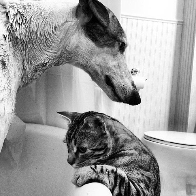 Ami comme chien et chat a