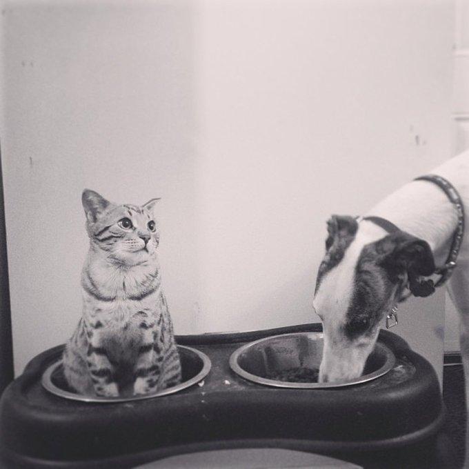 Ami comme chien et chat b