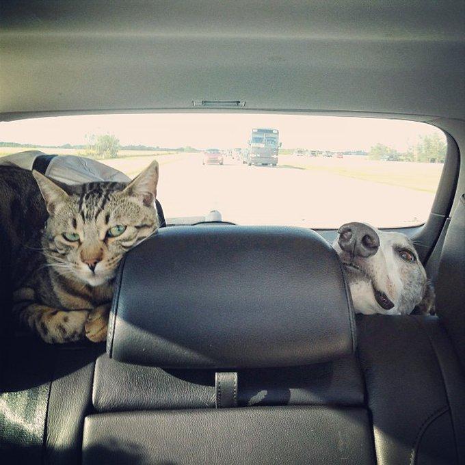 Ami comme chien et chat car