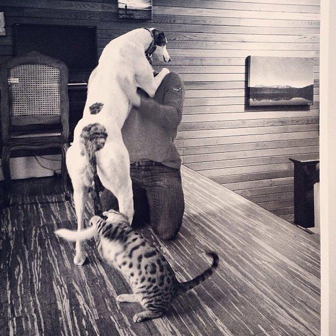 Ami comme chien et chat d