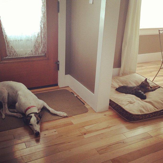 Ami comme chien et chat e