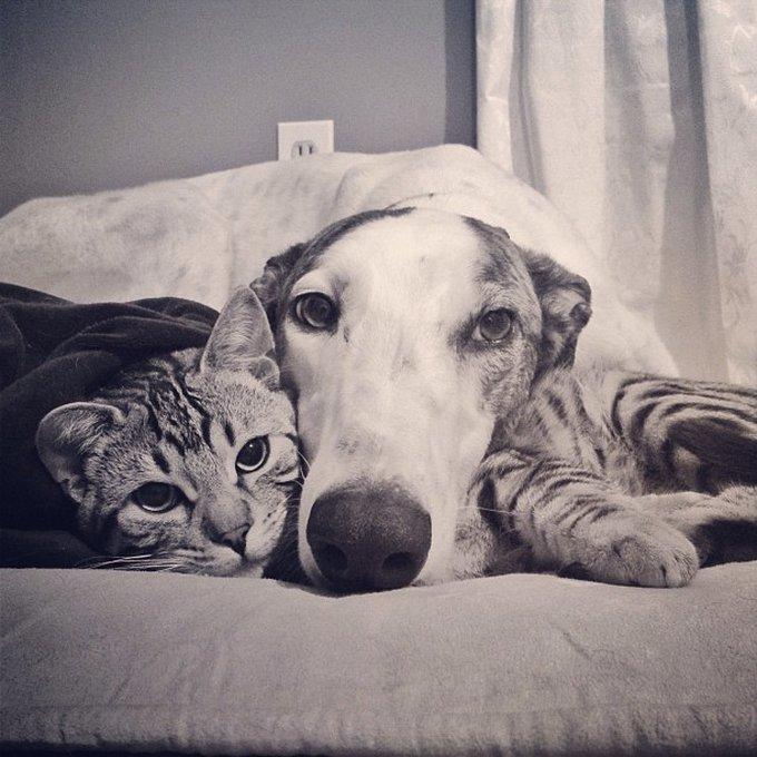 Ami comme chien et chat r