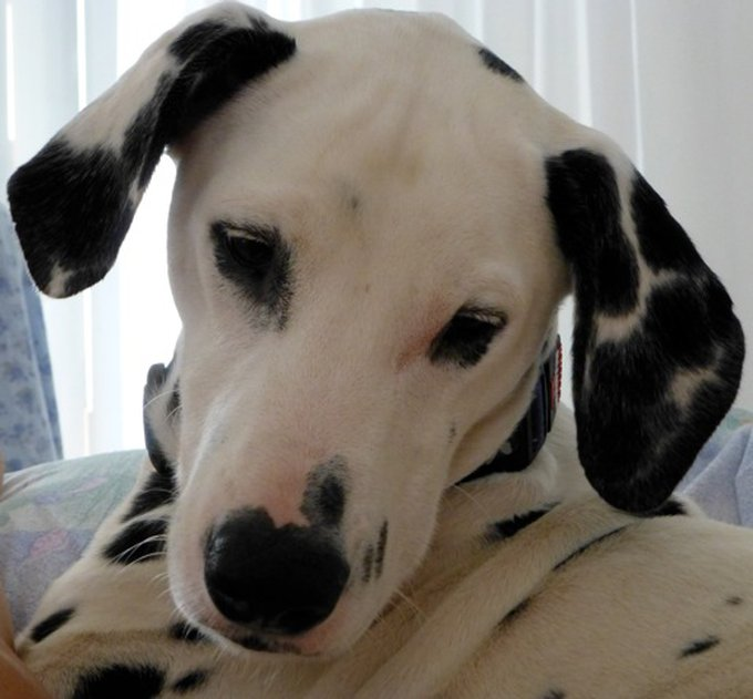 Rencontre avec Fly, un chien à la gentillesse incarnée
