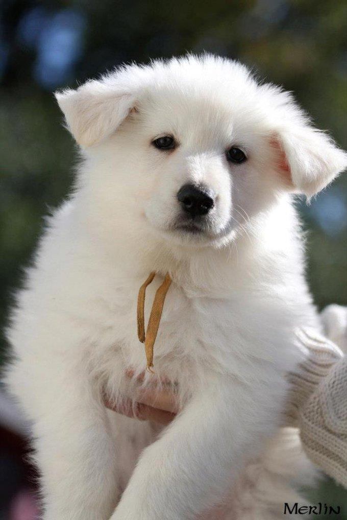Rencontre avec Helsy, une chienne trop jolie