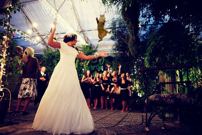 brides_throwing_cats_2