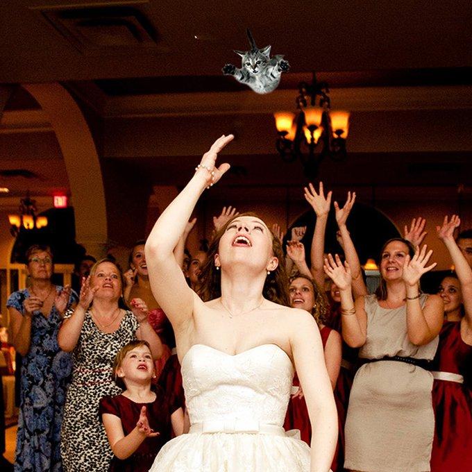 bridesthrowingcats_1