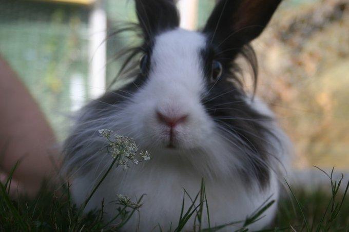 Rencontre avec Chichi, un lapin sans chichis !