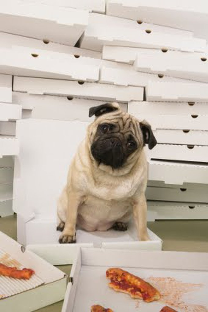 dog-ate-pizza