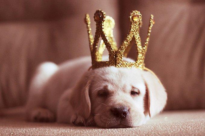 Le 4 Octobre : Journée Mondiale des Animaux