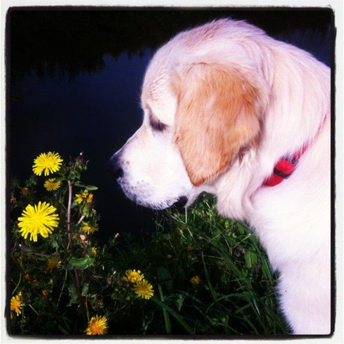 Rencontre avec Isia, une superbe chienne