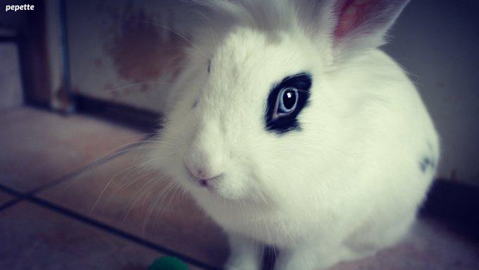 Rencontre avec Pepette, une superbe lapinette !