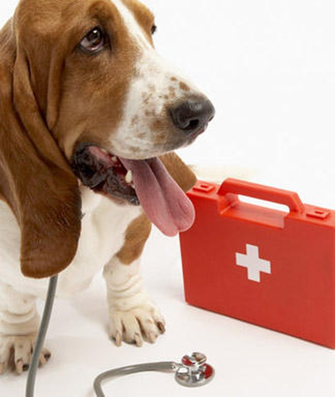 dog-first-aid-kit