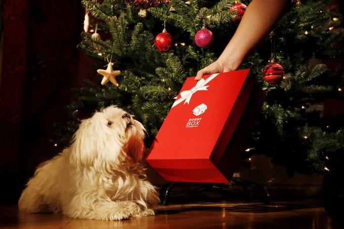 Offrez une jolie surprise à votre animal pour Noël