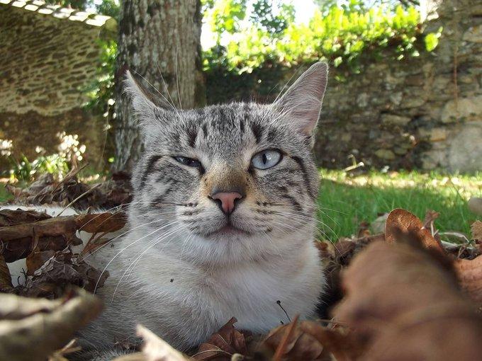Rencontre avec Gaia, un chat au grand estomac !