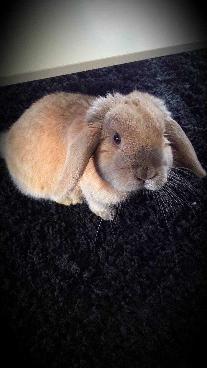 Rencontre avec Weedy, un lapin si joli