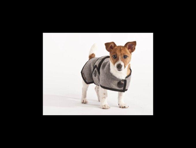dogclothes