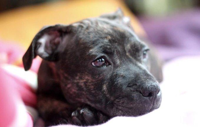 Rencontre avec Hoblivion, un chien si mignon
