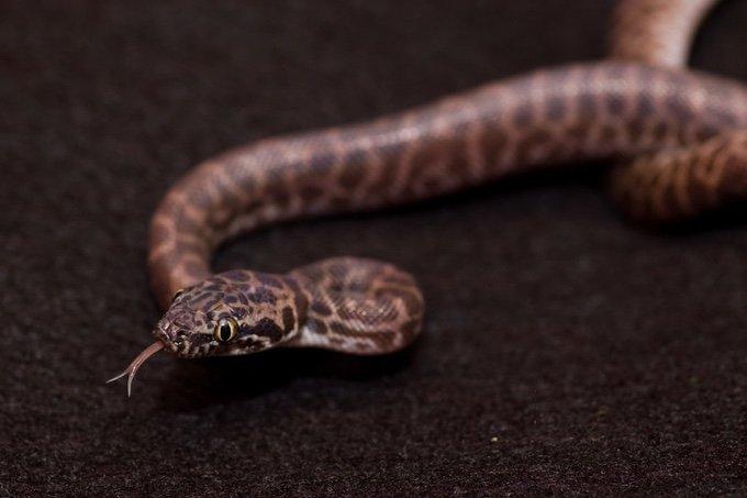 python de children