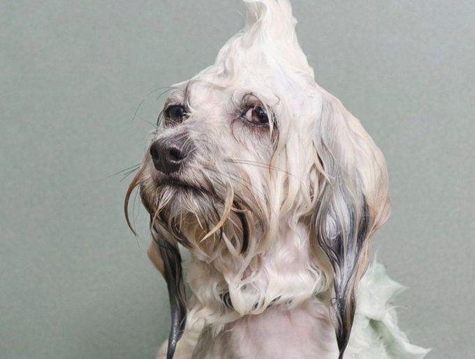 wetdog10