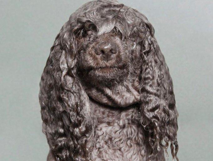 wetdog6