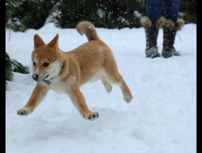 blog_yummets_chien3_neige_11_01_14.jpg