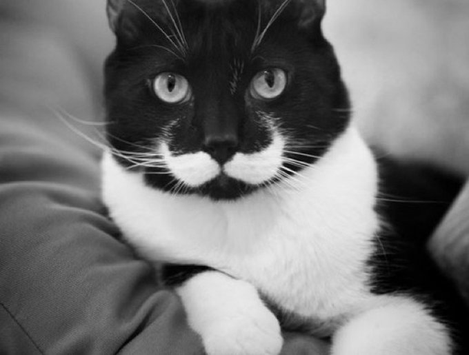 blog_yummypets_chat1_moustache_08_01_14