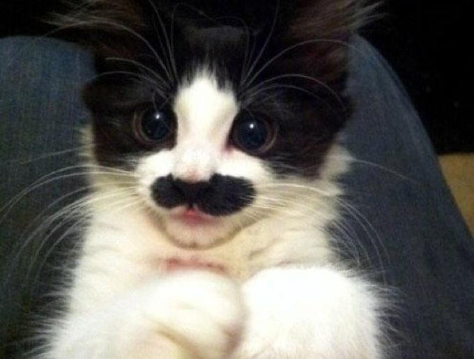blog_yummypets_chat2_moustache_08_01_14