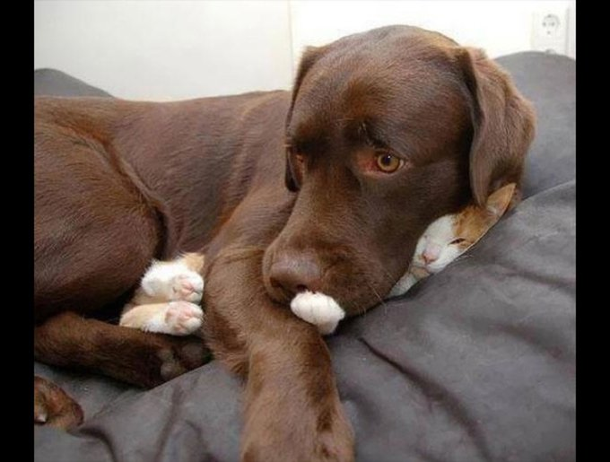 blog_yummypets_chat_chien_14_01_14