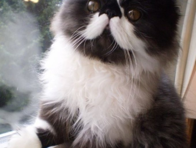 blog_yummypets_chaton2_moustache_08_01_14