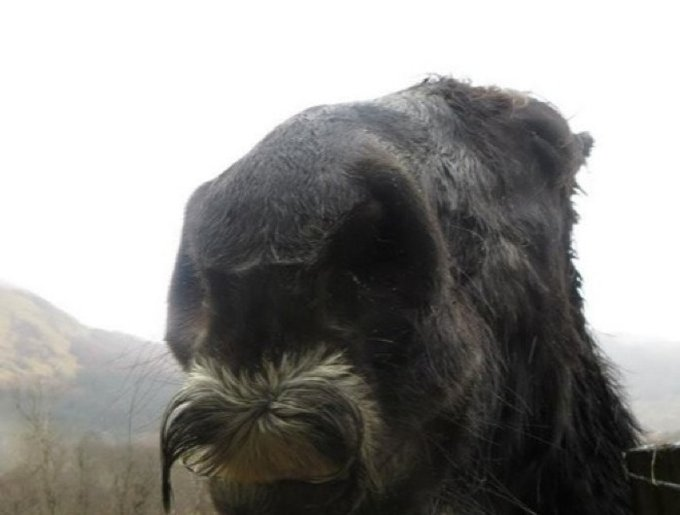 blog_yummypets_cheval_moustache_08_01_14