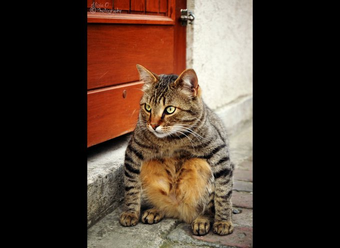blog_yummypets_positiondrole_gagnant_01_2014