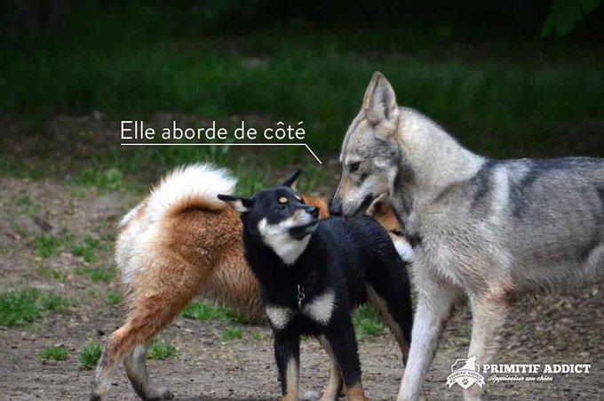 blog_yummypets_primitif_addict_signaux_chien_01_2014_3