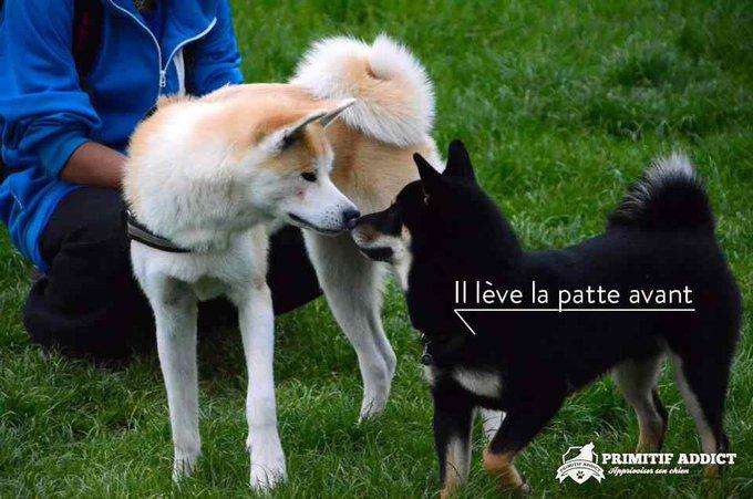 blog_yummypets_primitif_addict_signaux_chien_01_2014_5